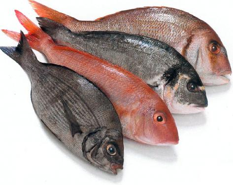 http://modelindo.files.wordpress.com/2010/12/fish_big.jpg