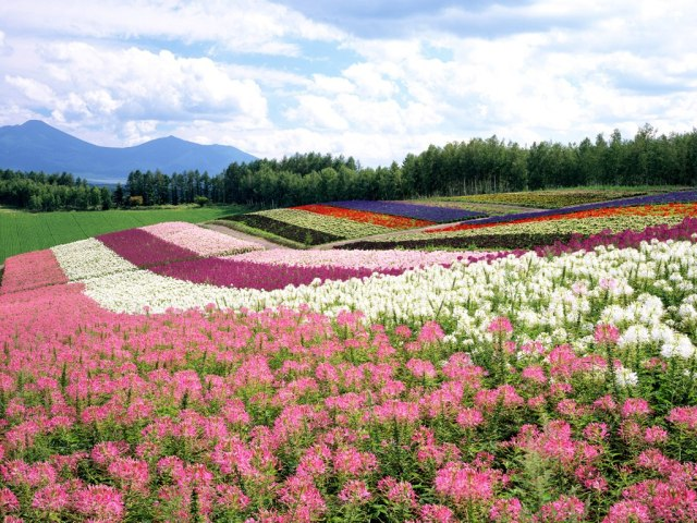 Japan-Hokkaido-Landscape-1-1024x768-436694