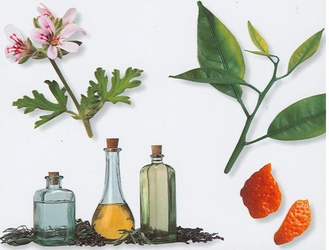 9 jenis minyak yang berkhasiat buat kesehatan